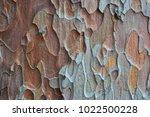 natural bark background or... | Shutterstock . vector #1022500228