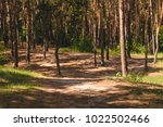 path with trees in green forest.... | Shutterstock . vector #1022502466