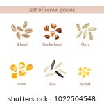 vector set of cereal grains... | Shutterstock .eps vector #1022504548