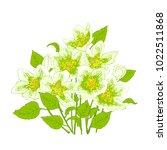 fresh jasmine flowers on a... | Shutterstock .eps vector #1022511868