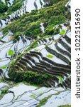 amazing abstract texture of... | Shutterstock . vector #1022515690