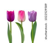 three purple and pink tulips... | Shutterstock .eps vector #1022529589