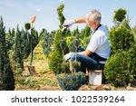 gardener trimming coniferous... | Shutterstock . vector #1022539264