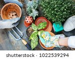 gardening concept....   Shutterstock . vector #1022539294