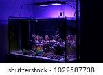 display saltwater coral reef... | Shutterstock . vector #1022587738