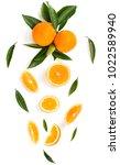 branch of orange tree with... | Shutterstock . vector #1022589940