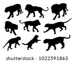 lions and tigers vector... | Shutterstock .eps vector #1022591863