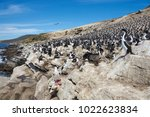 large breeding colony of... | Shutterstock . vector #1022623834