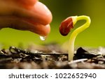 seed germination with hand... | Shutterstock . vector #1022652940