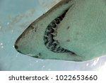 underwater with a shark's teeth | Shutterstock . vector #1022653660