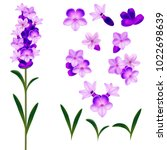 Realistic Detailed 3d Lavender...