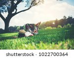 young woman lying down on grass.... | Shutterstock . vector #1022700364