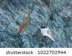shells on gray stone  the sea... | Shutterstock . vector #1022702944