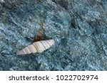 shells on gray stone  the sea... | Shutterstock . vector #1022702974