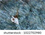shells on gray stone  the sea... | Shutterstock . vector #1022702980