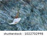 shells on gray stone  the sea... | Shutterstock . vector #1022702998