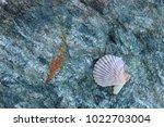 shells on gray stone  the sea... | Shutterstock . vector #1022703004