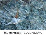 shells on gray stone  the sea... | Shutterstock . vector #1022703040