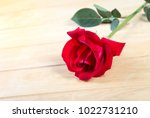 Red Rose On The Old Wood....