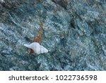 shells on gray stone  the sea... | Shutterstock . vector #1022736598