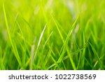 high resolution close up macro... | Shutterstock . vector #1022738569