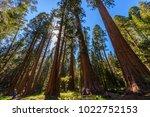 people walking on the big trees ... | Shutterstock . vector #1022752153