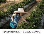 little girl keeps strawberry... | Shutterstock . vector #1022786998