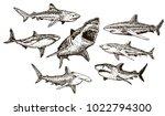 shark icon set. vector ink hand ...   Shutterstock .eps vector #1022794300