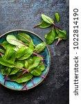 fresh mangold leaves  swiss... | Shutterstock . vector #1022814190