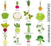 set of vegetables for companion ... | Shutterstock .eps vector #1022826910