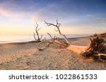 Dead Trees And Driftwood At...