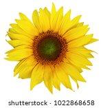 Single Beautiful Sunflower...