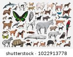 illustration drawing style of... | Shutterstock . vector #1022913778