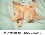 Stock photo little red kitten the kitten lies on the fluffy carpet at home little kitten sleeps close up of 1022926240