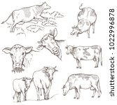 set of bulls. the cow is coming ... | Shutterstock .eps vector #1022996878
