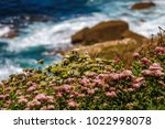 photo of little plants and... | Shutterstock . vector #1022998078