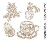 bergamot fruits  flowers ... | Shutterstock .eps vector #1022998690