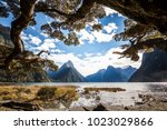 some tree branches on the...   Shutterstock . vector #1023029866