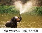 Thai Elephant  Daily Bath  In...