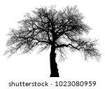 Tree Branches White Background Tree - Fine Art prints