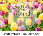 pink  purple and yellow tulips... | Shutterstock . vector #1023096520