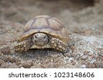 Stock photo close up african spurred tortoise resting in the garden slow life africa spurred tortoise 1023148606
