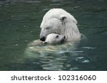 Bear With Cub. Moscow Zoo