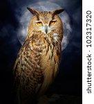 Bubo Bubo Eagle Owl Night Bird...