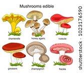 set natural mushrooms russula ... | Shutterstock .eps vector #1023176590