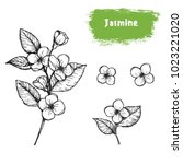 jasmine hand drawn sketch.... | Shutterstock .eps vector #1023221020