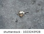 Dead Bird On The Asphalt Highway