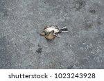 Dead Bird On The Asphalt Highway