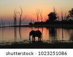 Elephant Silhouette At Sunset...