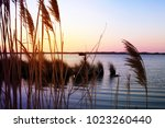 tall grass in spring or summer... | Shutterstock . vector #1023260440